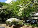 Dogwoods / Azaleas  in front of house - 11503 MAPLE RIDGE RD, RESTON