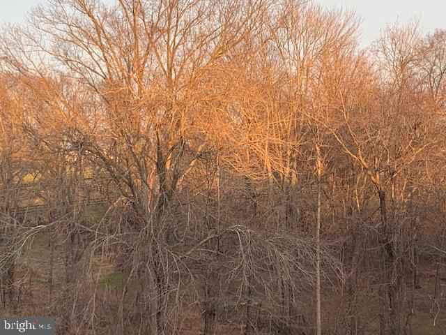 Backs to trees.  View from the back deck. - 17652 TEDLER CIR, ROUND HILL