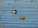Watch the ducks swim by from your deck - 20577 SNOWSHOE SQ #301, ASHBURN