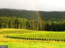 Rainbow over vineyard block 4 - 12138 HARPERS FERRY RD, PURCELLVILLE