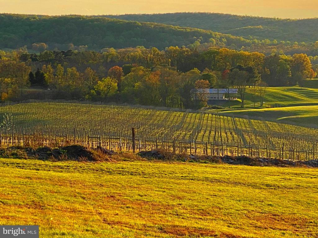 Vineyard block 4 and the Winery - 12138 HARPERS FERRY RD, PURCELLVILLE