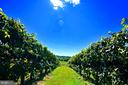 Grapevines - 12138 HARPERS FERRY RD, PURCELLVILLE