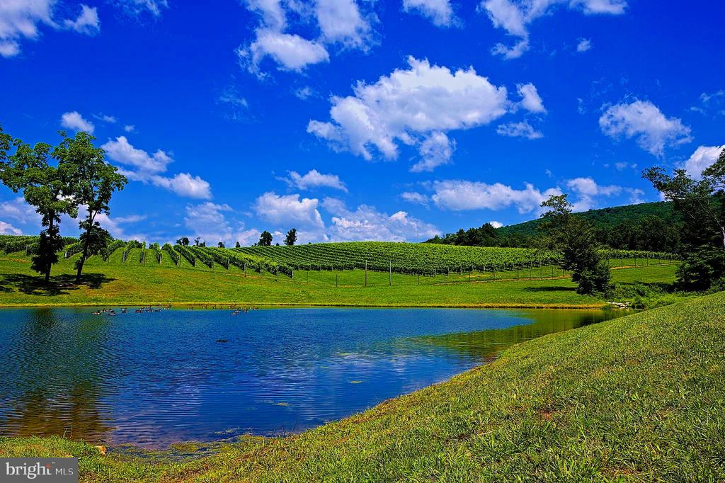 Large pond next to vineyard block 3 - 12138 HARPERS FERRY RD, PURCELLVILLE