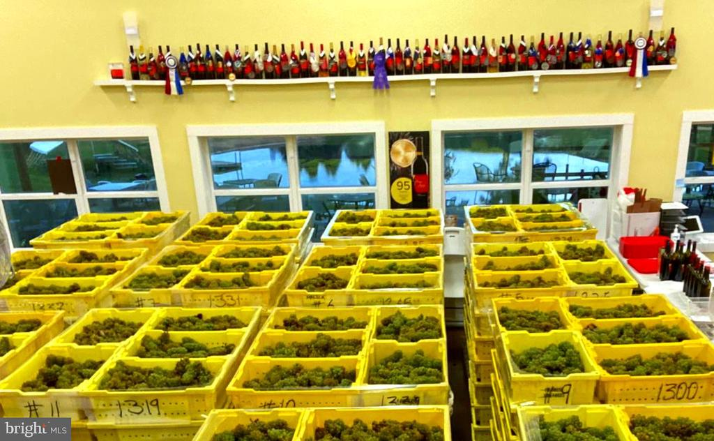 Award winning grapes awaiting processing - 12138 HARPERS FERRY RD, PURCELLVILLE