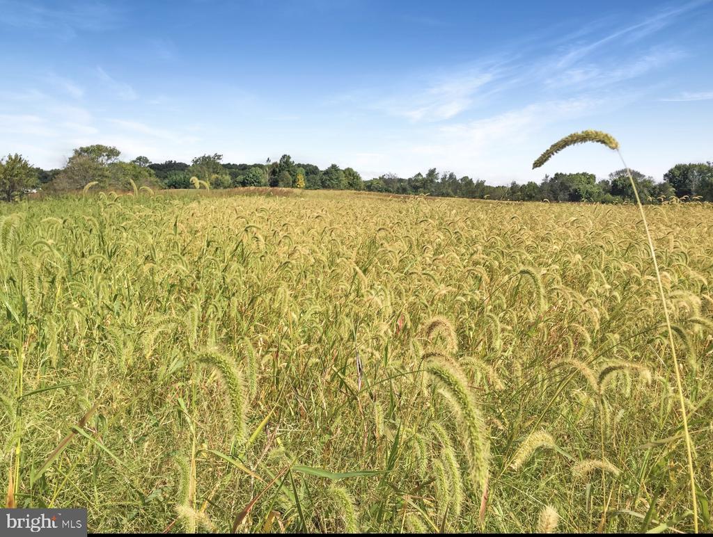 - 15614 DALEY FARM LN, PURCELLVILLE