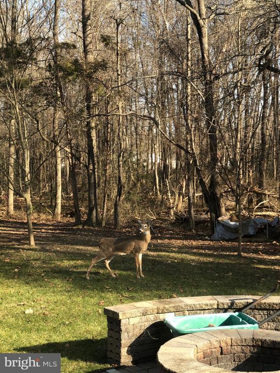 Area Wildlife Includes Deer, Fox, Turkeys - 8353 LONGFIELDS LN, ALEXANDRIA