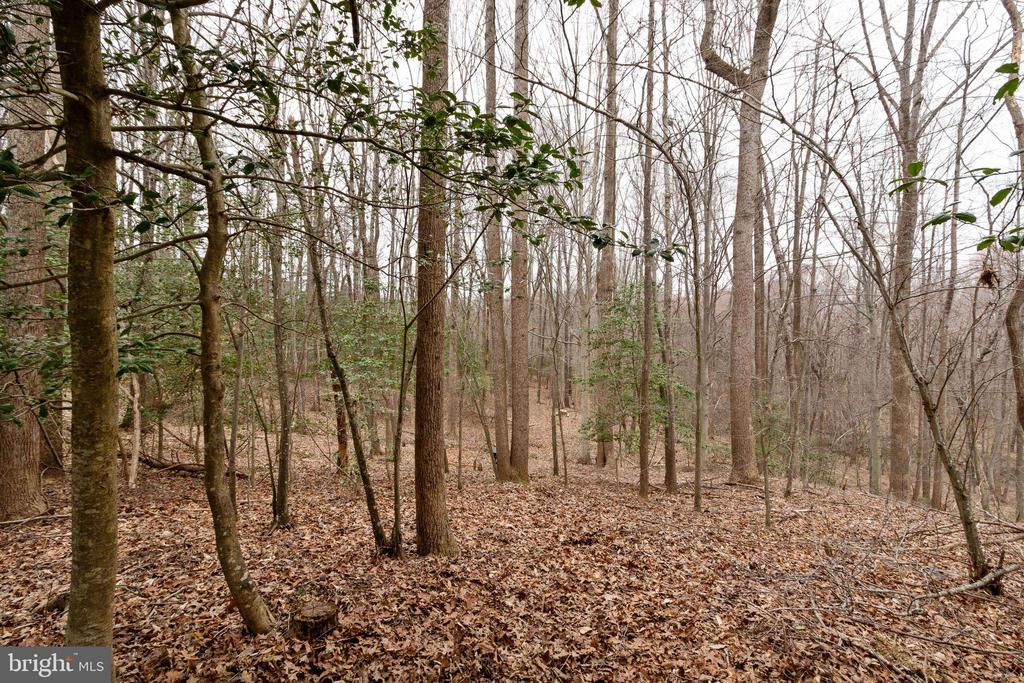 Wooded view - 15230 BOWMANS FOLLY DR, MANASSAS