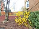 Side yard - 123 GRETNA GREEN CT, ALEXANDRIA