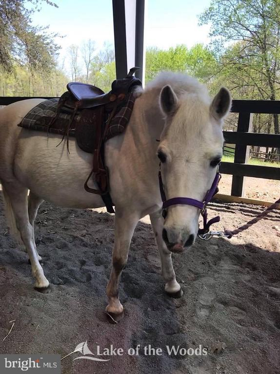 Equestrian Center - 112 WOODLAWN TRL, LOCUST GROVE