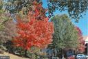 Blazing fall colors - 5731 MASON BLUFF DR, BURKE