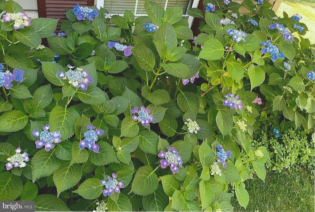 Perennial paradise - 5731 MASON BLUFF DR, BURKE