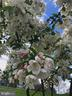 Garden - 36494 WINDING OAK PL, PURCELLVILLE