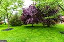 Beautiful Trees Just Beyond the Fence - 44043 CHOPTANK TER, ASHBURN