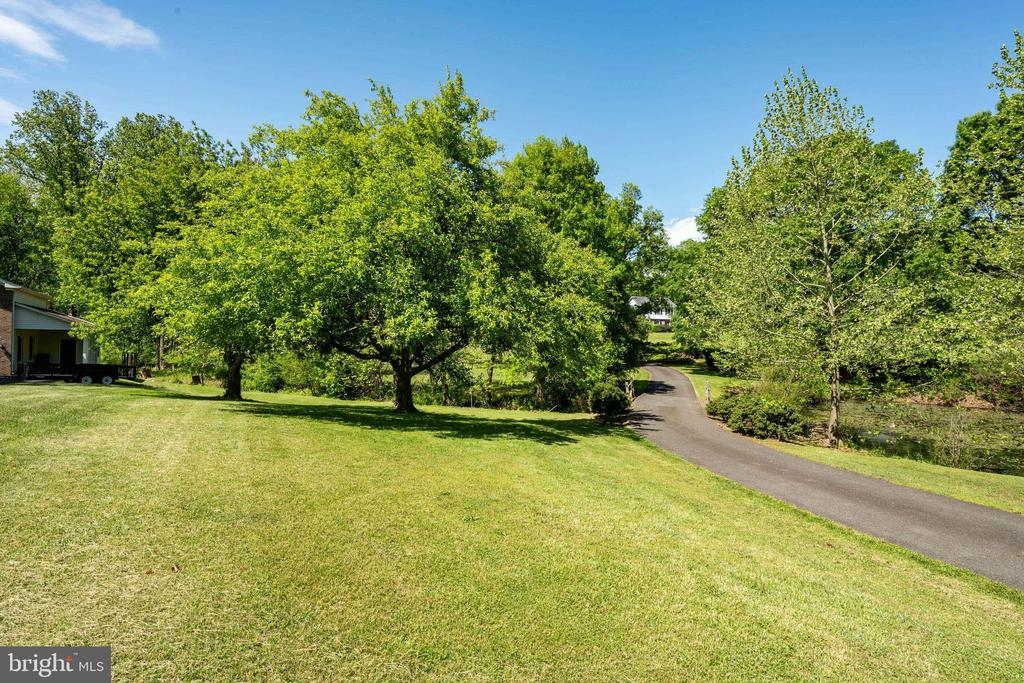 Apple Trees with Stream in background and pond to - 4316 MOUNTAIN VIEW DR, HAYMARKET
