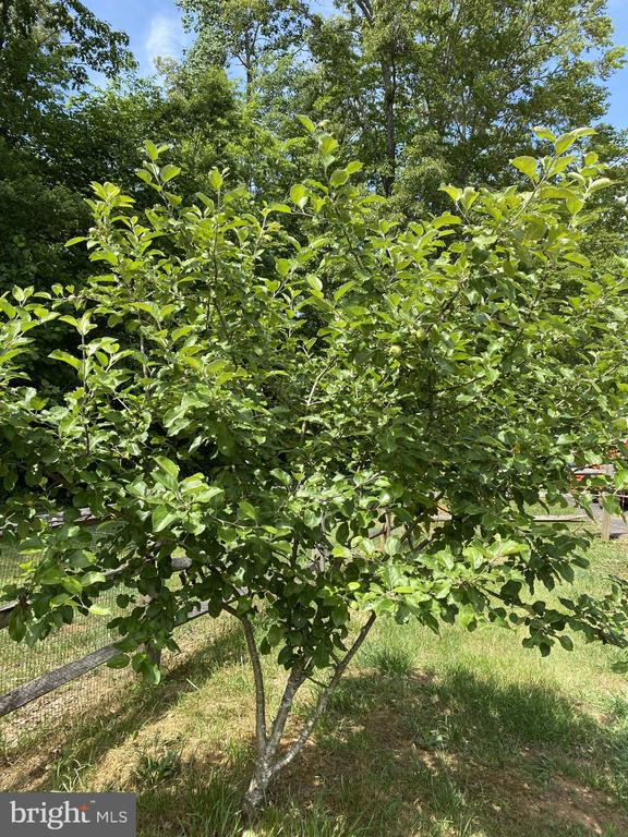Apple & Pear + many more fruit trees on Property! - 23039 RAPIDAN FARMS DR, LIGNUM