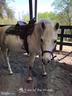 Equestrian center - 402 HARRISON CIR, LOCUST GROVE