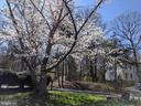 Lots of mature trees provide great landscaping - 1227 AQUIA DR, STAFFORD