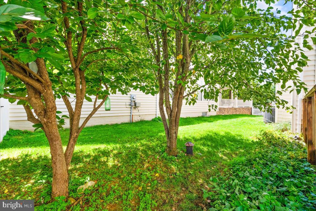 Pair trees in backyard - 17510 LETHRIDGE CIR, ROUND HILL