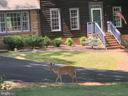 Some of the neighbors - 1122 SPAIN DR, STAFFORD