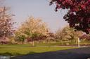 Spring Trees and Cherry Blossoms in Front Yard - 41192 BLACK BRANCH PKWY, LEESBURG