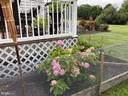 Hydrangeas in Bloom Around the Deck - 41192 BLACK BRANCH PKWY, LEESBURG