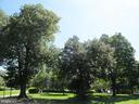 Stanton Park three blocks south. - 321 F ST NE, WASHINGTON