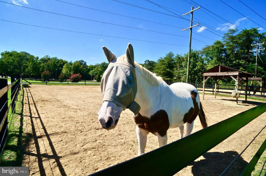 Outdoor Horse Pens - 2056 FARRAGUT DR, STAFFORD