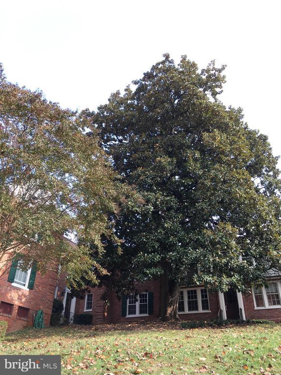 1817 N RHODES STREET  4-257, Arlington, Virginia