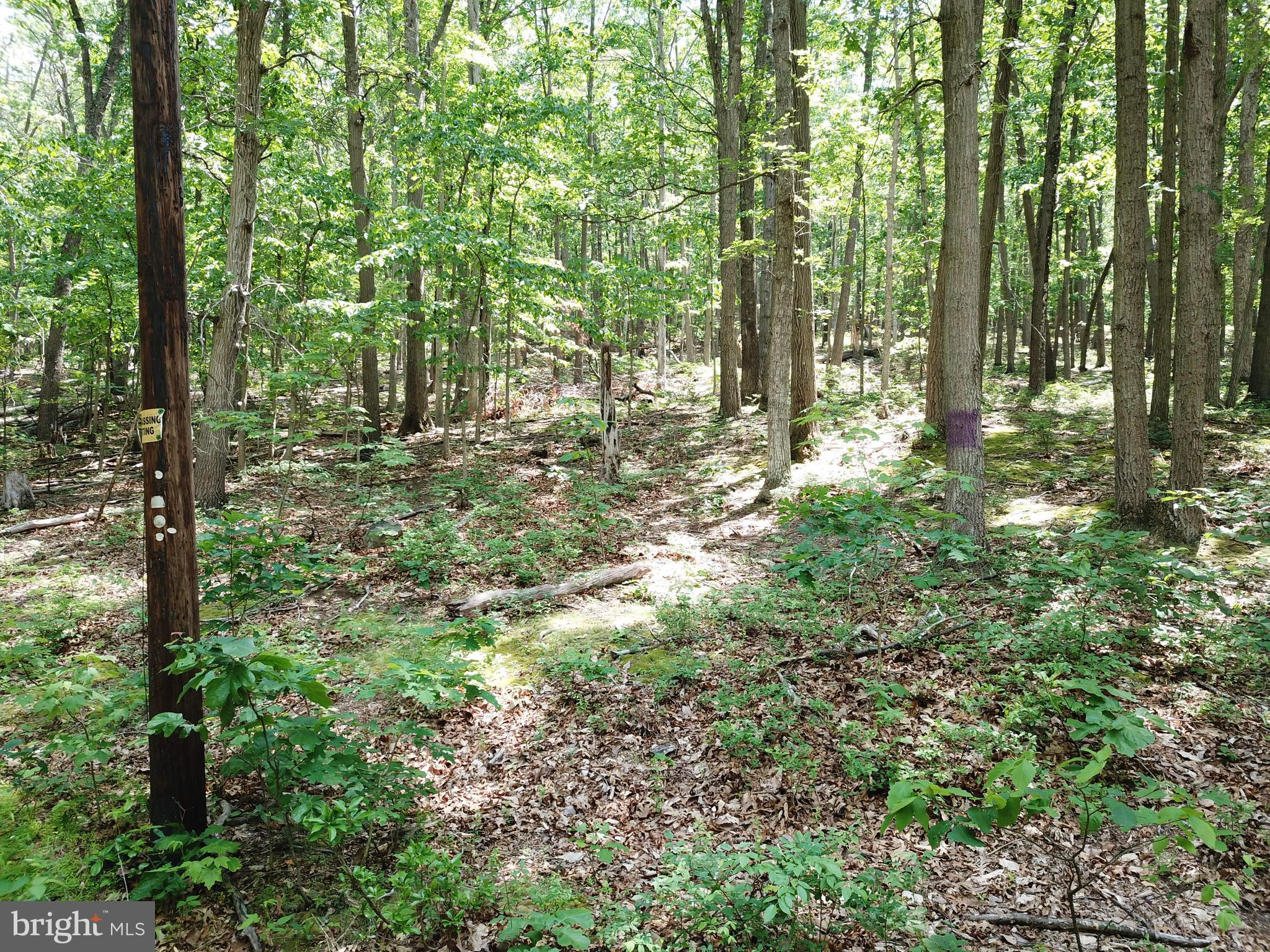 Lot 11 Crystal Hollow, Green Spring, WV 26722