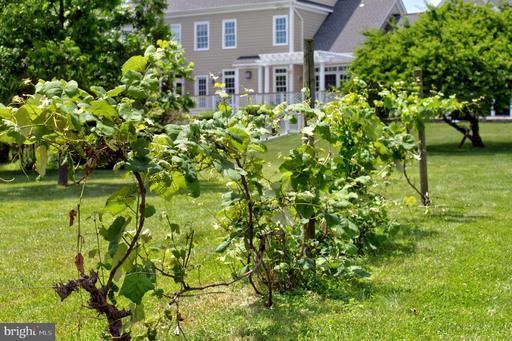 24450 Old Carolina Rd Aldie VA 20105