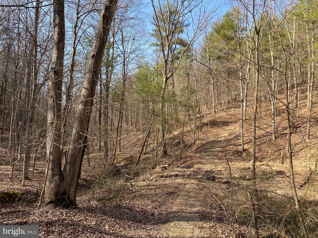 Hunters/Nature Lovers Delight -  5.628 unrestricted acres.  Build a campfire ring, pitch a tent or improve the roughed in road to bring your camper. Approved septic permit.