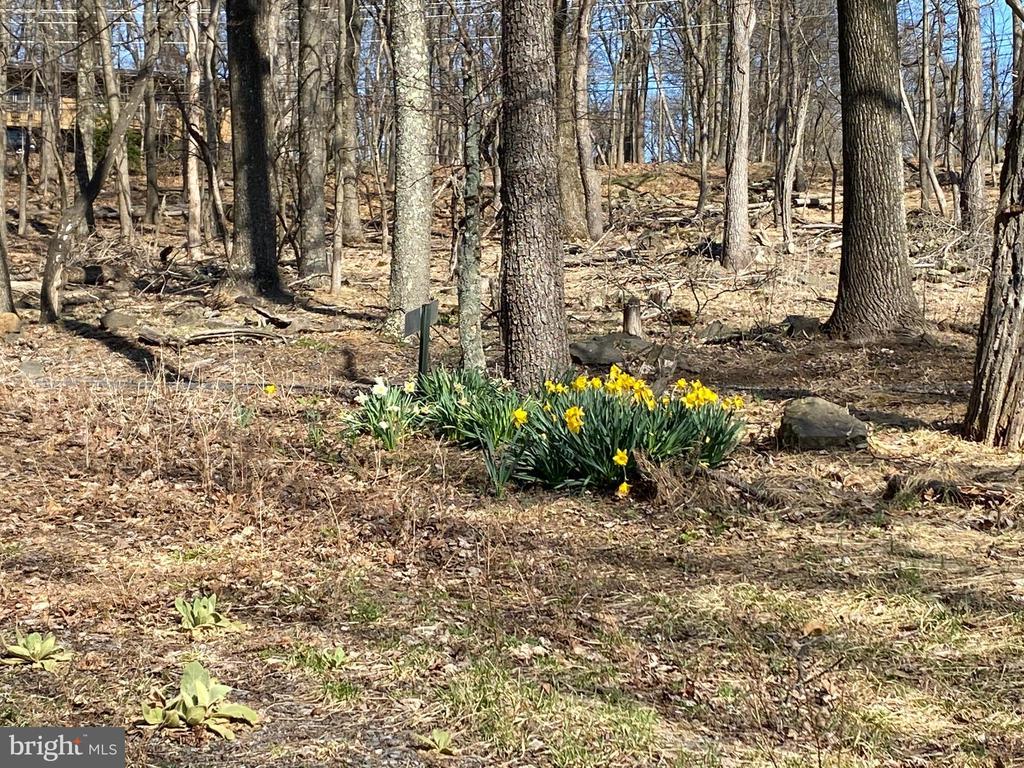 Photo of 106 Mountain Spring Rd