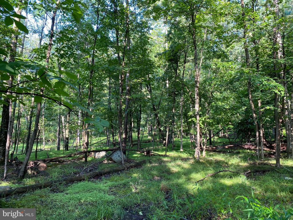 24.2838 Acres - Beautiful wooded acreage that backs up to Cacapon State Park.   This land has already been divided into 4 lots with septic permits for each lot.   Located right off of US Route 522 with a 20' right of way already installed to the property.     Located just minutes from the entrance to Cacapon State Park where you can enjoy all the amenities.