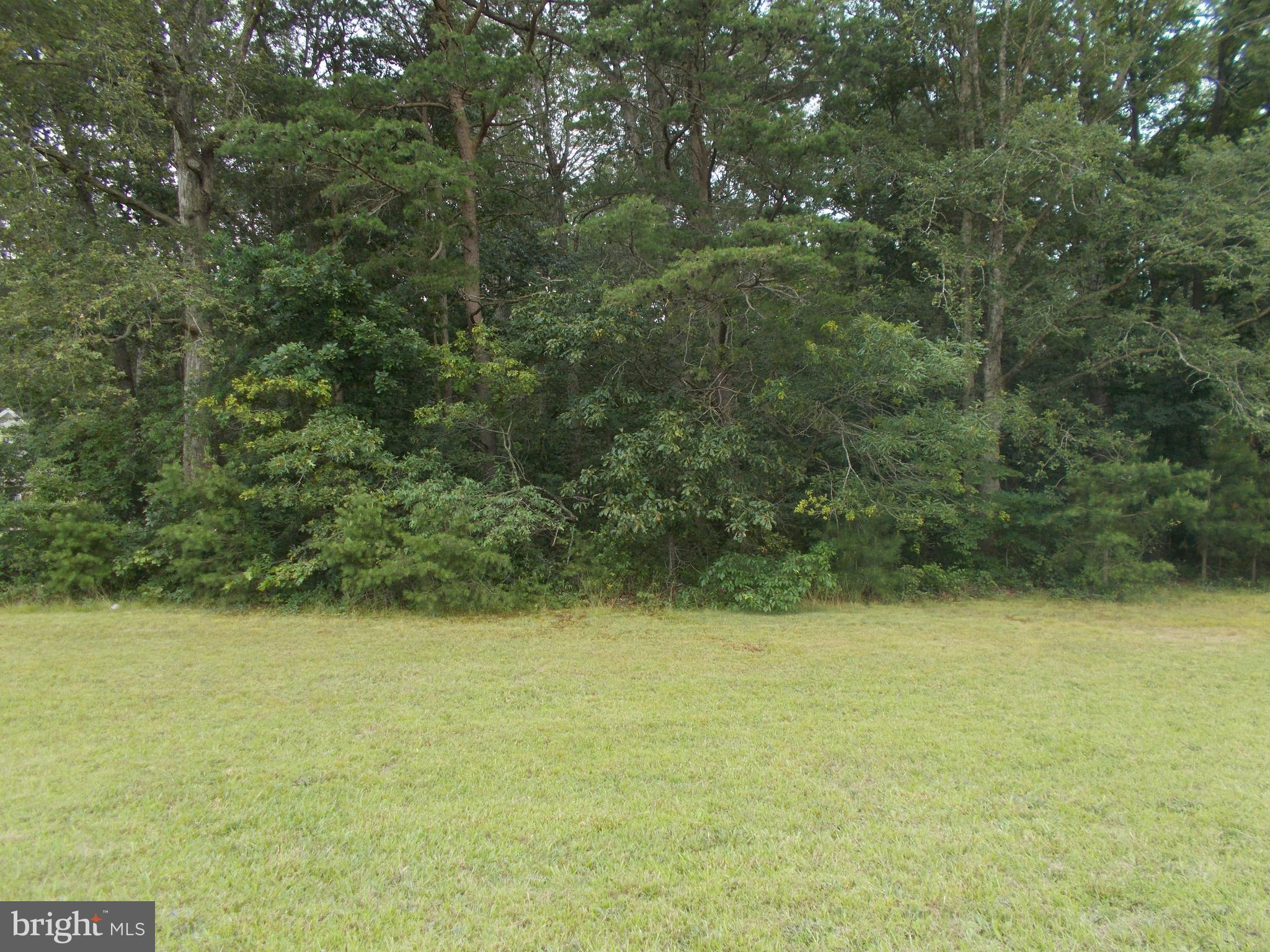Beautiful wooded lot in North Dorchester. Very quiet area surrounded by farmland.  Perc approved. No covenants and restrictions.